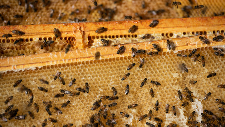Whole Frame Honey: Beautiful Exploration of the World of Bees