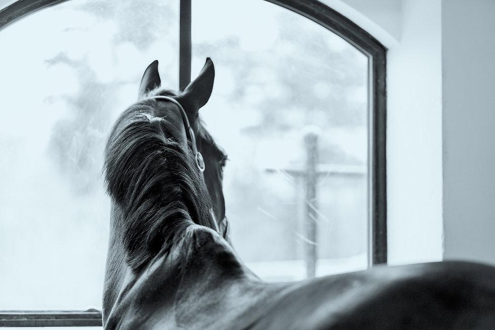 veterinär göteborg häst