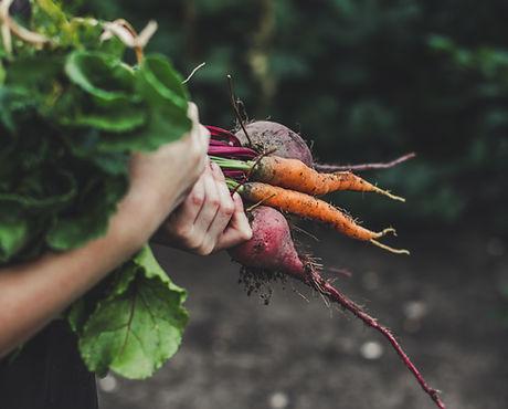 vegetabiliska Plockning
