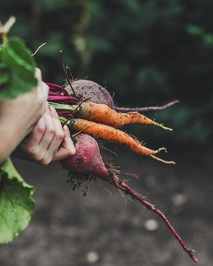 Picking légumes