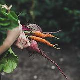 野菜のピッキング