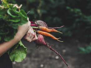 Learn how to grow your own salad AT HOME. Discover this beautiful skill to clear your mind.