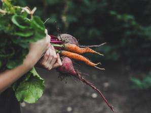 Planning a vegetable garden?