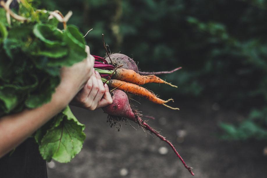 Récolte des légumes