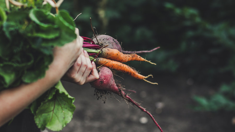 FREE Online Veggie Garden Consultations