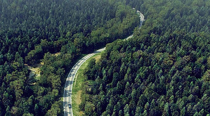 den-brooks-forest-vray.jpeg