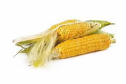 corn-1751321_960_720.webp