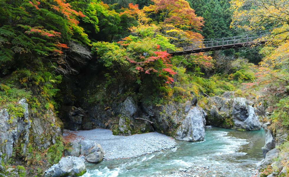 Hatonosu(photoAC).jpg