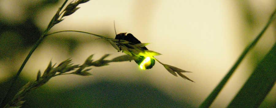 Firefly(Free)_01.jpg
