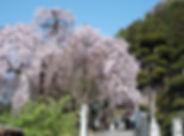 Baiganji_01.JPG
