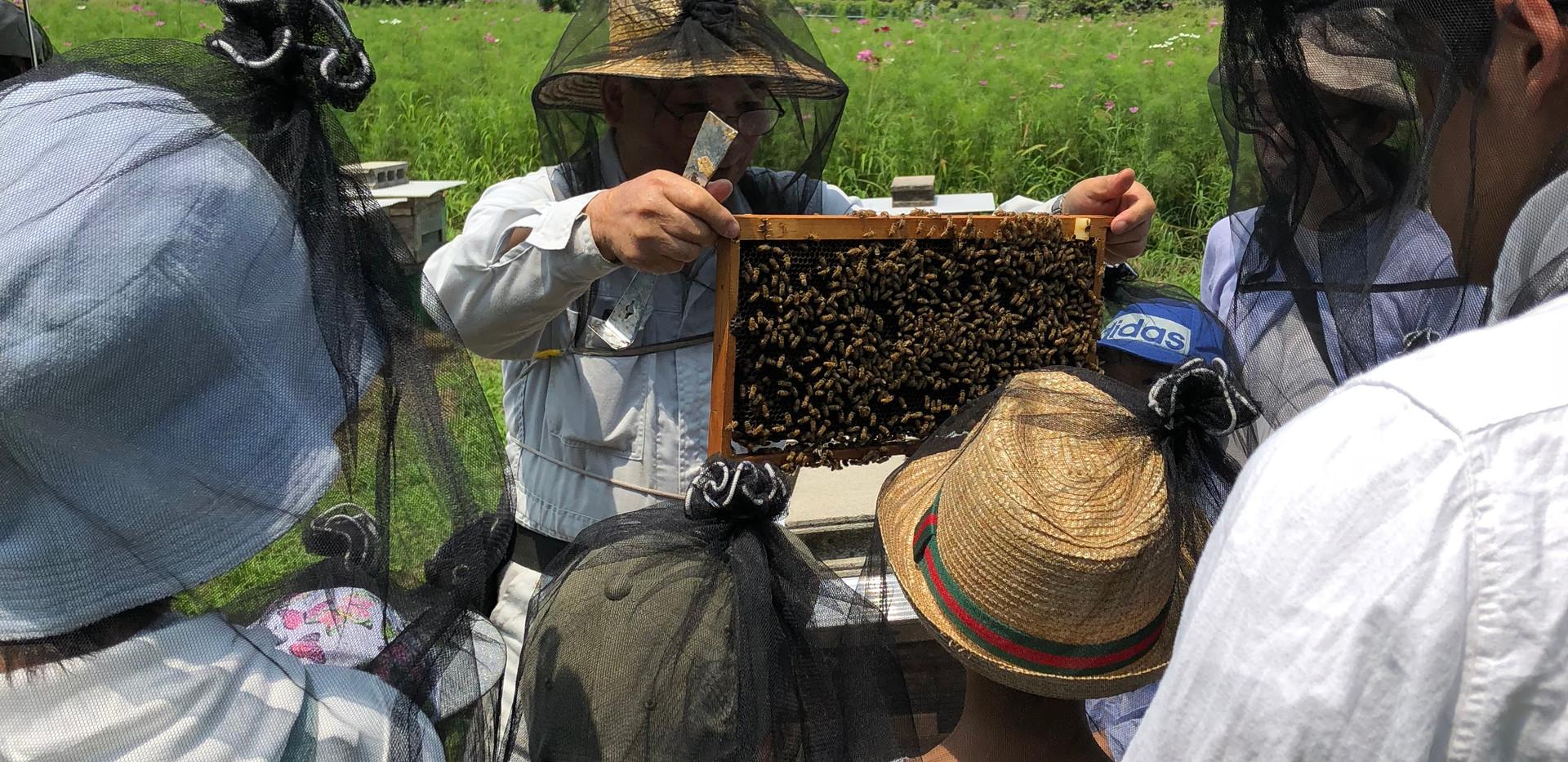 養蜂見学.JPG