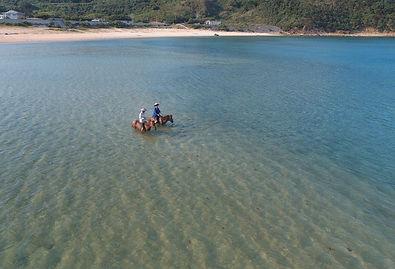 比川浜で海馬
