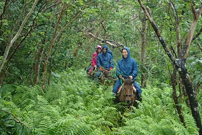 ジャングル乗馬