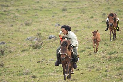 モンゴル的競馬