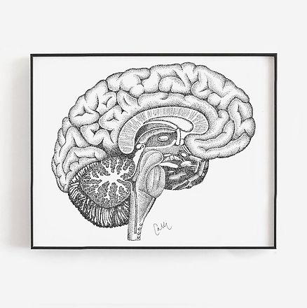 Side.Brain_edited.jpg