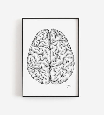 Top.Brain.1.jpg