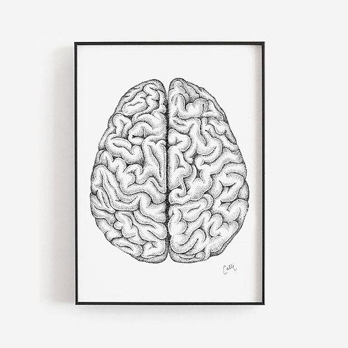 Dorsal Brain Print