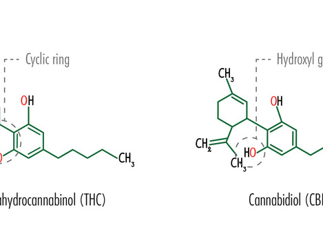 Comfortable with CBD? THC is nothing to fear.