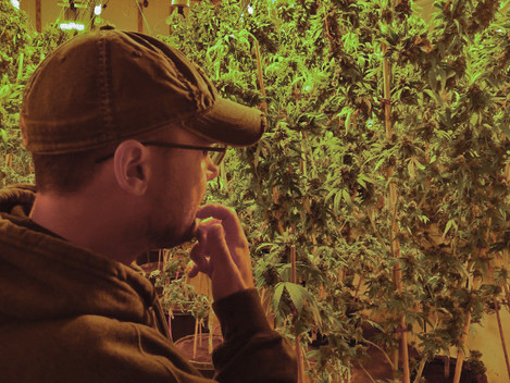 Grower Profile: Cannabis King Gardens