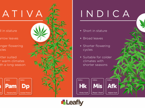 Indica, Sativa or Hybrid? The Origin and End of Cannabis Categorizing