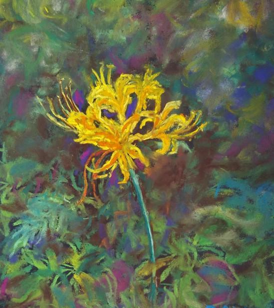 Golden Spider Lily.JPG
