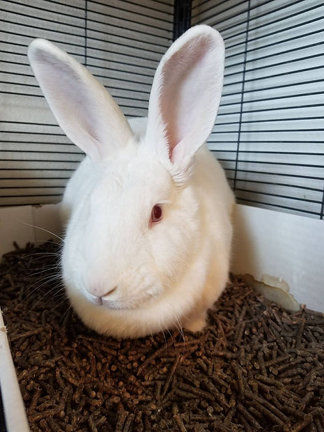 Sephora - ADOPTED bunny