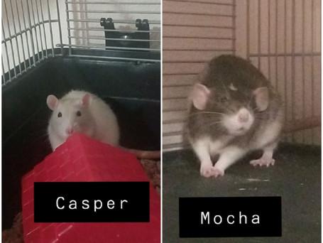 Casper & Mocha