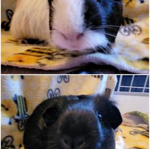 Moppit & Gruella