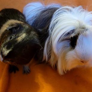 Pepper & Ninny