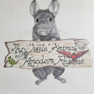 BONDED MALE RATS (group of 5) *photo coming soon*