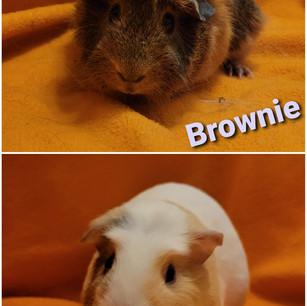 Brownie & Penny