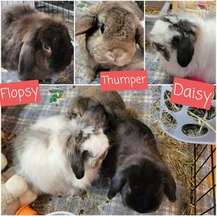 Flopsy, Thumper, Daisy