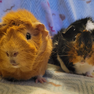 Snickers and Caramel