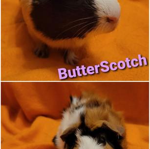 ButterScotch & Butters