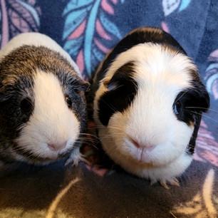 Annie & Tillie