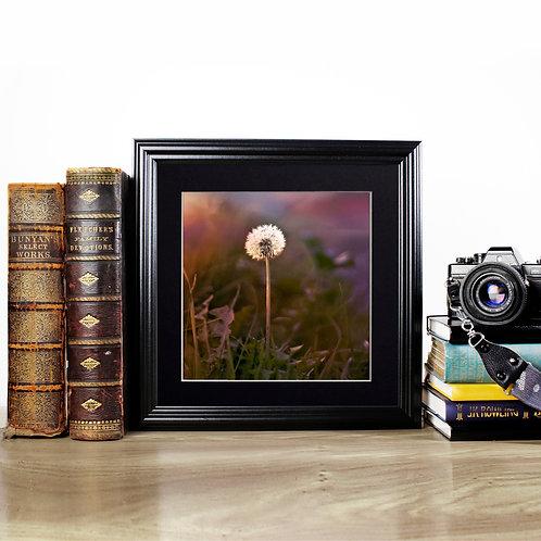 Dandelion - Photography Print