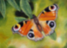 Kayleigh Almara Art Butterfly Colour Pencil Drawing