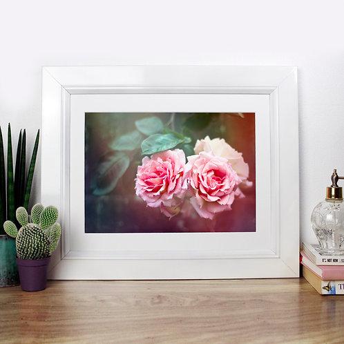Fairytale Rose - Photography Print