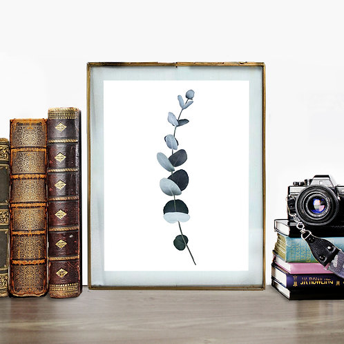 Eucalyptus - Fine Art Print