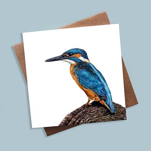 Kingfisher - Greeting Card