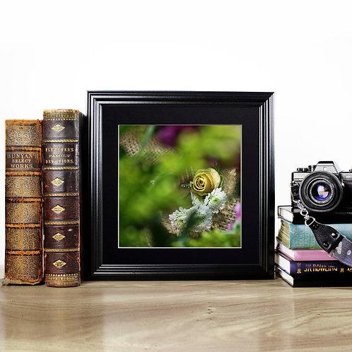 Yellow Rose - Photography Print