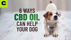 6 Ways CBD Oil Can Help Your Dog