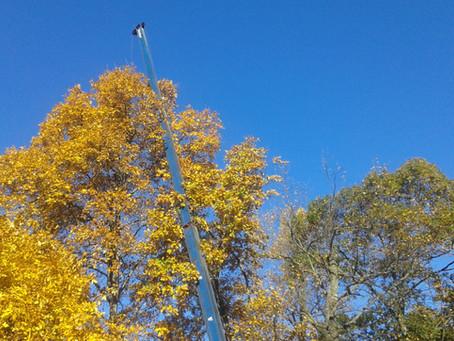 Wellness of A Tree | Tree Service