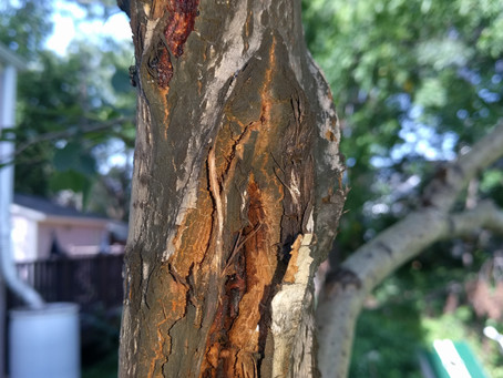 Recognizing signs of a sick tree
