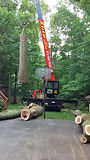 Tree Services NJ