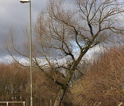 Tree Injuries | Tree Service