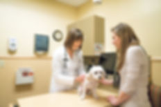 Haarstad Veterinary Dermatology-skin exam of dog