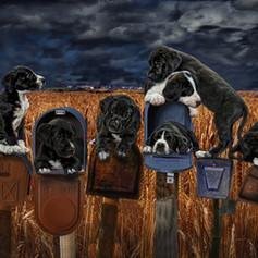 Too many pups