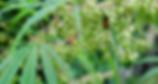 111318_sm_bees-hemp_feat_REV.jpg