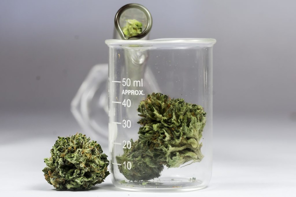 Cannabis Science. Image supplied by Grown Rogue